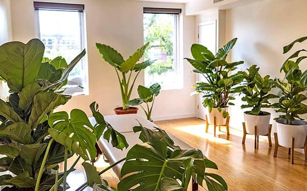 Biofield Medical - The Green Healing Room